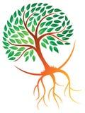 Drzewo Zakorzenia loga Obraz Stock