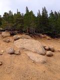 Drzewo zakorzenia spead przez teren górzystego Obraz Stock
