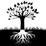 Drzewo zakorzenia sylwetkę ilustracja wektor