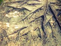 Drzewo zakorzenia tło Fotografia Royalty Free
