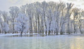 drzewo zakrywająca mrozowa zima Obrazy Royalty Free