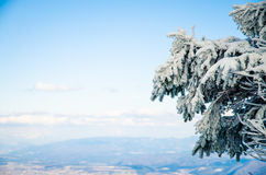 Drzewo zakrywający śniegiem Obraz Stock