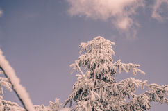 Drzewo zakrywający śniegiem Zdjęcie Stock