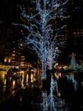 Drzewo zakrywający w białych bożych narodzeniach zaświeca odbijać na dżdżystej ziemi w nowym York podczas bożych narodzeń fotografia stock