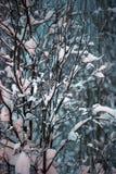Drzewo zakrywający z śniegiem w zmroku Zdjęcia Royalty Free