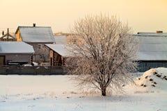 Drzewo zakrywający z mrozem Zdjęcie Royalty Free