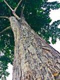 Drzewo zamknięta up siła Wielka i chłodno zdjęcia royalty free