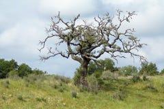Drzewo zarysowywający przeciw chmurom Obrazy Stock