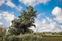 Drzewo zginał od silnego wiatru Dobry letni dzień z silnym w obrazy royalty free