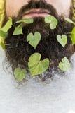 Drzewo zieleni liście w jesieni fotografia royalty free