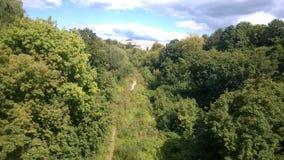 Drzewo, zielenie, wąwóz, ścieżka, korona, liście, lato, widok, głębia, budynek, niebo, chmury, słońce, światło Zdjęcia Stock