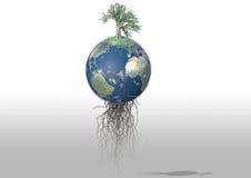 drzewo ziemi Zdjęcia Royalty Free