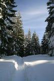 drzewo zima Obraz Stock