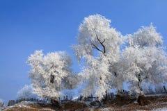 drzewo zima Zdjęcia Royalty Free
