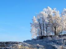 drzewo zima Fotografia Stock