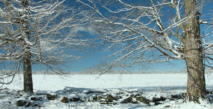 drzewo zima Obrazy Stock