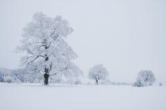 drzewo zimy. Obraz Stock