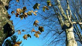 drzewo zimy. Zdjęcie Stock
