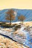 drzewo zimy. Obrazy Stock