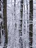 drzewo zimy. Obrazy Royalty Free