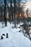 Drzewo zimy śnieg Zdjęcia Royalty Free