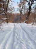 Drzewo zimy śnieg Fotografia Royalty Free