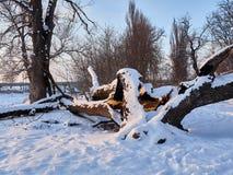 Drzewo zimy śnieg Fotografia Stock