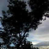 Drzewo zmierzch Zdjęcie Royalty Free