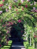 Drzwi róże Zdjęcia Royalty Free