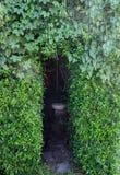 Drzwi zielony liść naturalny Zdjęcie Royalty Free