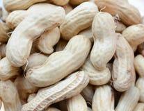 1ds tła zakończenia dof eos mkii arachidy spłycają spłycać orzeszki ziemne surowe Wiele arachidy w skorupach Fotografia Stock