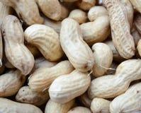 1ds tła zakończenia dof eos mkii arachidy spłycają spłycać orzeszki ziemne surowe Wiele arachidy w skorupach Zdjęcie Stock