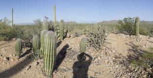 DSC2549a6000a kaktus Tucson góry okręg - Saguaro park narodowy - zdjęcie stock