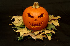 DSC04817.JPG. Halloween pumpkin on dry leafs Stock Photos