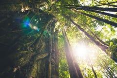 Dschungelüberdachungssonnenlicht Stockfotos