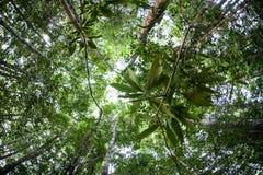 Dschungel-Überdachung in Indonesien Stockfotos