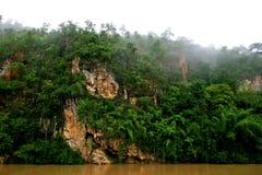 Dschungel 1 Lizenzfreies Stockbild