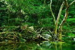 Dschungel Stockfoto