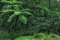 Dschungel Lizenzfreie Stockbilder