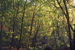 Dschungel Lizenzfreies Stockbild