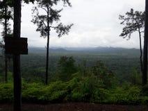 Dschungel-Ansicht Stockfotografie