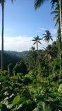 Dschungel-Ansicht Stockfotos