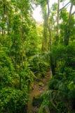 Dschungel in Bali Lizenzfreies Stockbild