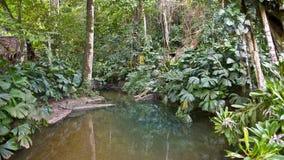 Dschungel-Becken stockfotos