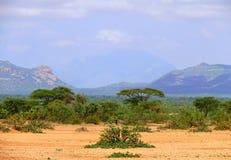 Dschungel-bedeckte Berge. Afrika, Äthiopien. Landschaftsnatur. Stockfotografie