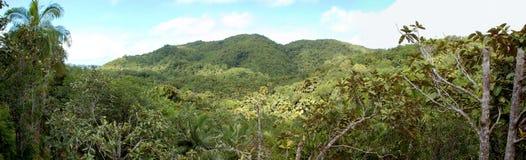 Dschungel bei Praslin Lizenzfreies Stockbild