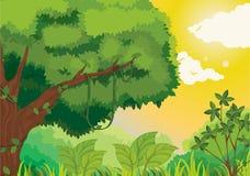Dschungel bei Sonnenuntergang stock abbildung
