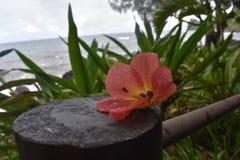 Dschungel des tropischen Regenwaldes wie die Einstellung der Blume, die auf einem Klotz sitzt lizenzfreie stockfotografie