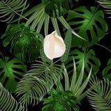dschungel Dickichte von tropischen Palmblättern Blumen- und Monsterblätter Nahtloses Blumenmuster Lokalisiert auf Schwarzem Stockbild