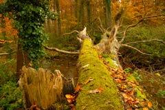 Dschungel in Fluss Lizenzfreie Stockfotografie
